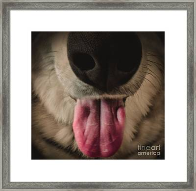 Puppy Breath Framed Print by Charlie Cliques