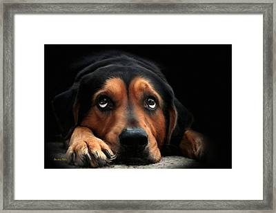 Framed Print featuring the mixed media Puppy Dog Eyes by Christina Rollo