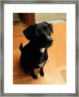 Puppy Dog Eyes Framed Print by Paul Gioacchini