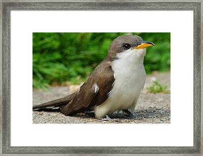 Puppy Dog Eyes Framed Print by Frozen in Time Fine Art Photography