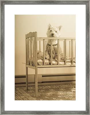 Puppy Dog In A Baby Crib Framed Print by Edward Fielding
