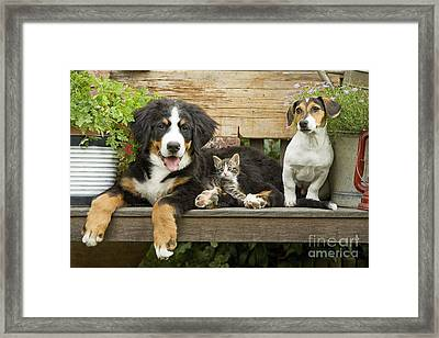 Puppy Dogs And Kitten Framed Print