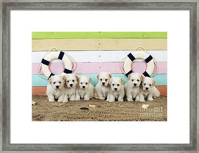 Puppy Dogs At The Beach Framed Print by John Daniels