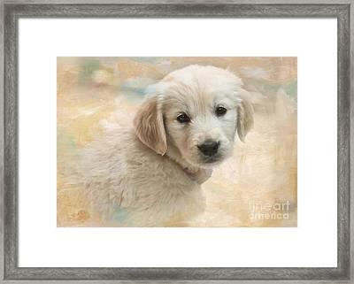 Puppy Eyes Framed Print by Jayne Carney