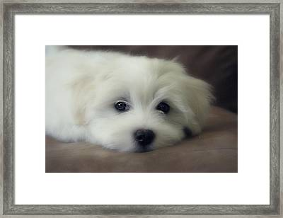Puppy Eyes Framed Print by Melanie Lankford Photography
