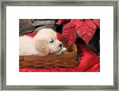 Framed Print featuring the photograph Puppy In A Basket by Paul Miller
