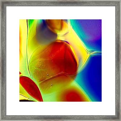 Puppy In Light Framed Print by Omaste Witkowski