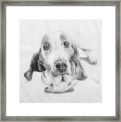 Puppy Framed Print by Jeremy Moore