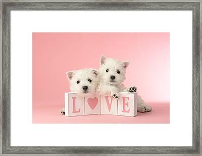 Puppy Love Framed Print by Greg Cuddiford