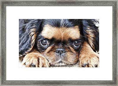 Puppy Love Framed Print by Jeannette Hunt