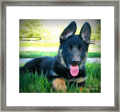 Puppy Love Framed Print by Jodie  Scheller
