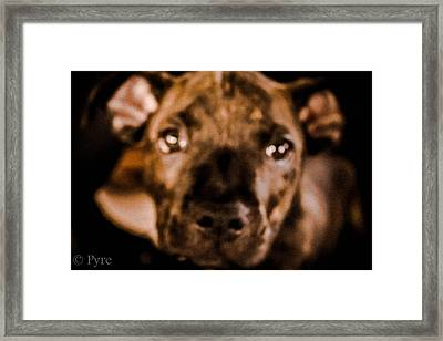 Puppy Love Framed Print by Raymond Peterson