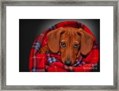 Puppy Love Framed Print by Susan Candelario