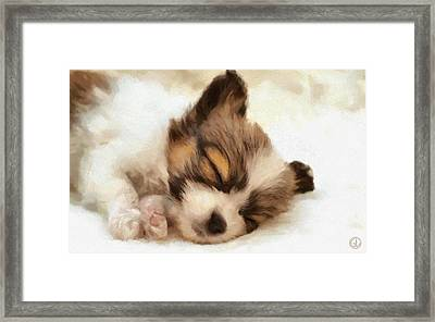 Puppy Nap Framed Print by Gun Legler
