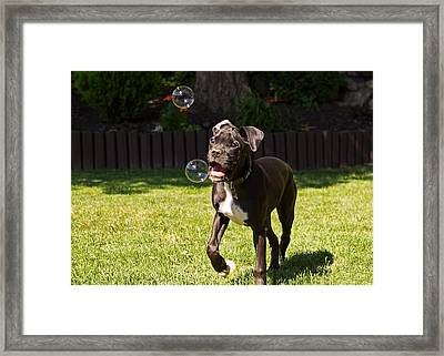 Puppy Playing With Bubbles Framed Print by Stephanie McDowell