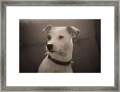 Puppy Portrait Framed Print by Carolyn Ricks