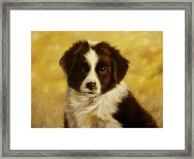 Puppy Portrait Framed Print by John Silver