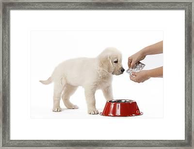 Puppy Receiving Medicine Framed Print by Jean-Michel Labat
