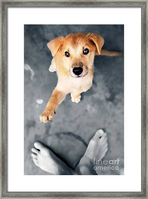 Puppy Saluting Framed Print by William Voon