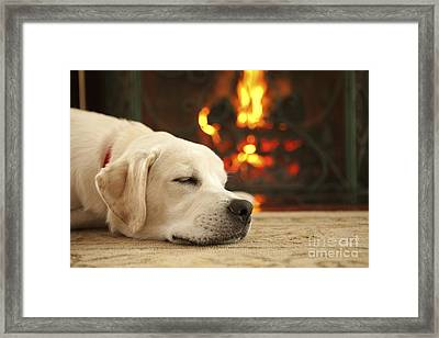 Puppy Sleeping By The Fireplace Framed Print