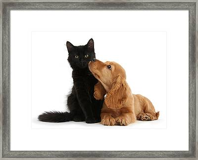 Puppy With Kitten Framed Print
