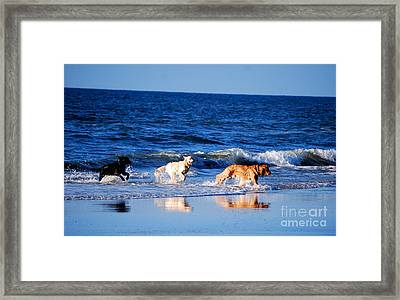Pups On The Beach Framed Print by Linda Mesibov