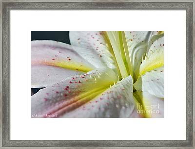 Pure And Fragrant Framed Print by Felicia Tica