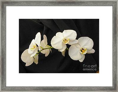 Pure And Simple Framed Print by Carolyn Bistline