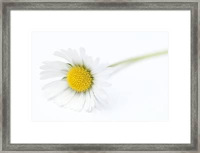 Pure Framed Print