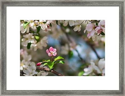 Pure Beauty - Featured 3 Framed Print by Alexander Senin