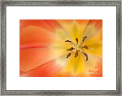 Pure Bliss Framed Print by Beve Brown-Clark Photography