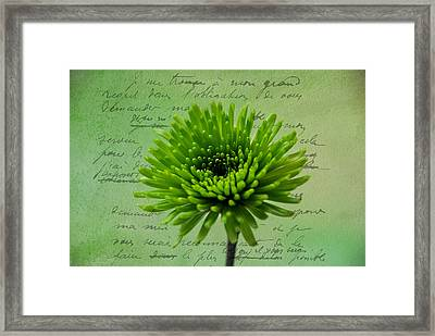 Pure Green 2 Framed Print by Linda Segerson