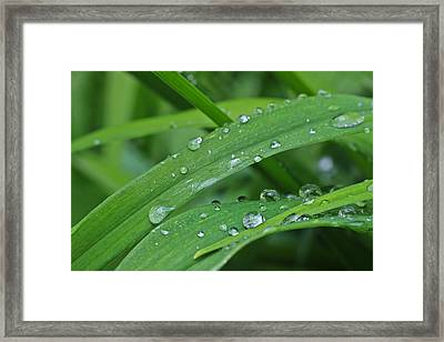 Pure Green Framed Print