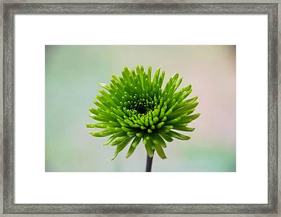 Pure Green Framed Print by Linda Segerson