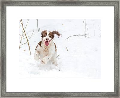 Pure Joy Framed Print by Cheryl Baxter