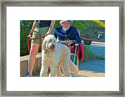 Pure Joy Framed Print