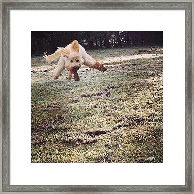 Pure Joy! Dig In The Dirt Then Run As Framed Print