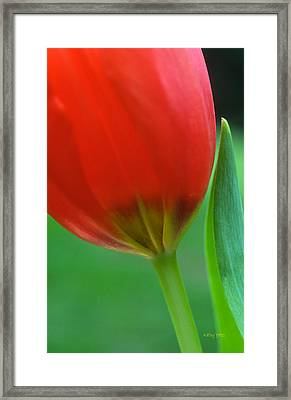 Pure Framed Print by Kathy Yates