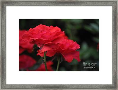 Pure Love Framed Print by Nona Kumah