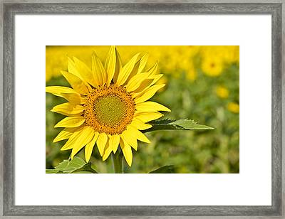 Pure Luck Framed Print