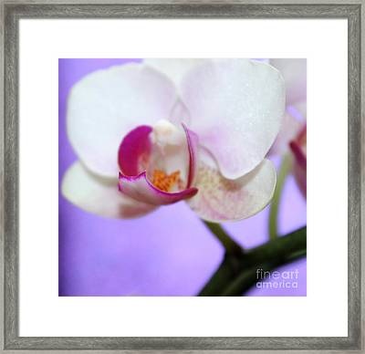 Pure Orchid Framed Print