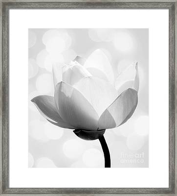 Pure Framed Print by Jacky Gerritsen