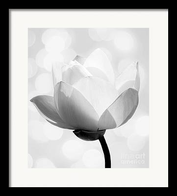 White Lotus Framed Prints
