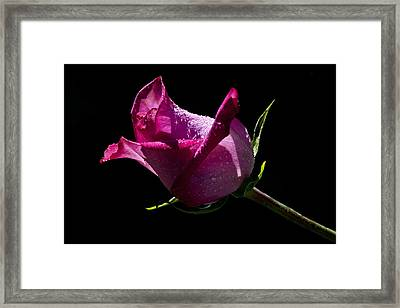 Framed Print featuring the photograph Pure Pink by Doug Norkum
