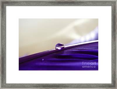 Pure Purple Framed Print
