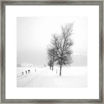 Pure White Framed Print