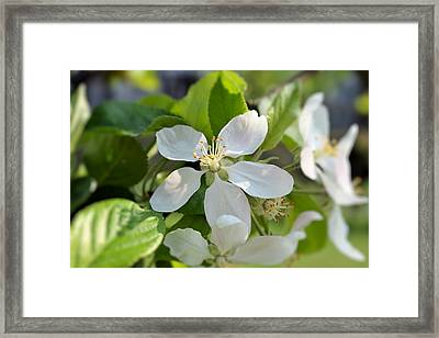 Pure White Framed Print by Dave Woodbridge