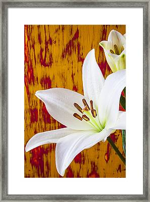 Pure White Lily Framed Print by Garry Gay