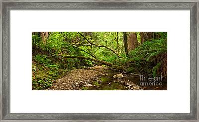 Purisima Creek Framed Print