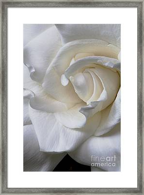 Purity All Profits Go To Hospice Of The Calumet Area Framed Print